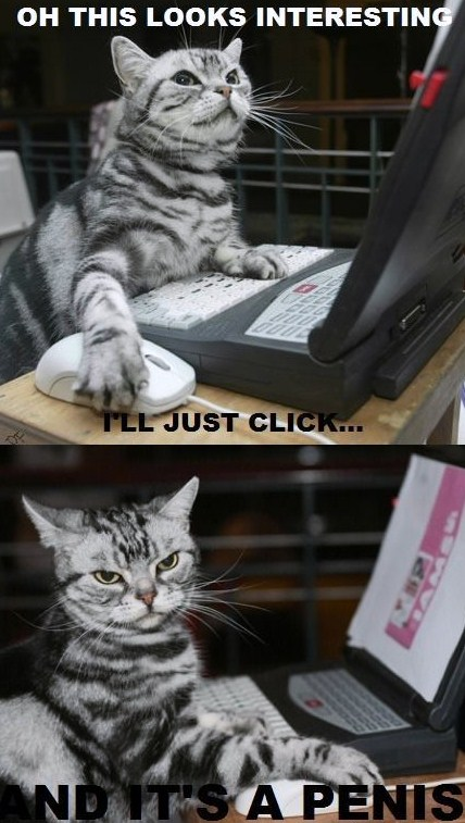 cat-browsing-interwebz_o_1198985