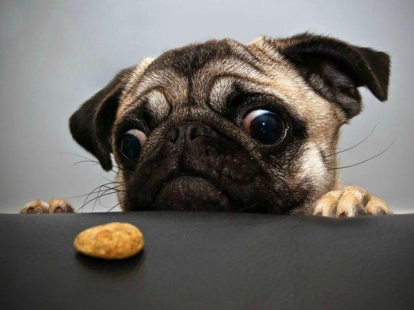 Pug-Cookie-1024x768